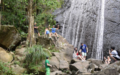 Visiting El Yunque Rainforest; Guided vs. Unguided Tours